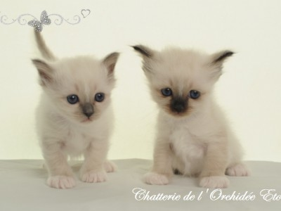 Chatons d'Infinity 2015