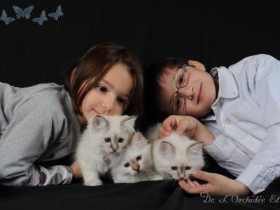 Séances photos avec les chatons