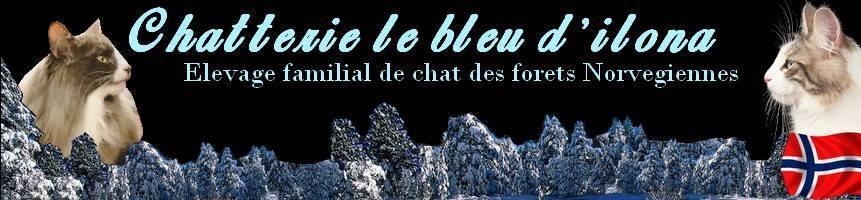 chatterie_le_bleu_d_ilona