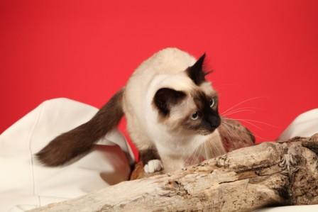 frimousse_arras2012_3
