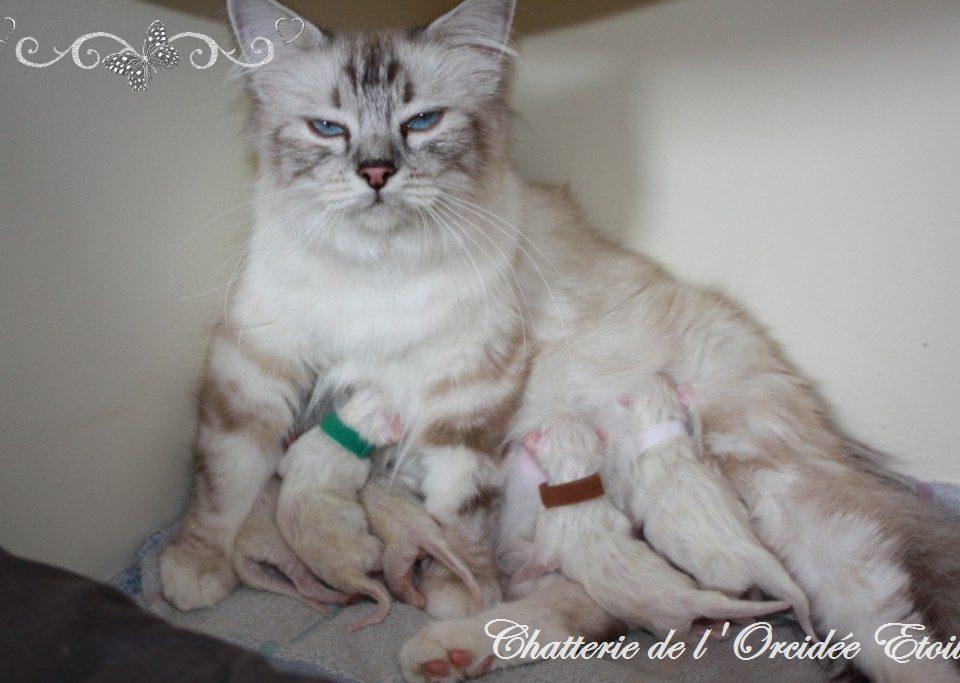 Naissance des chatons