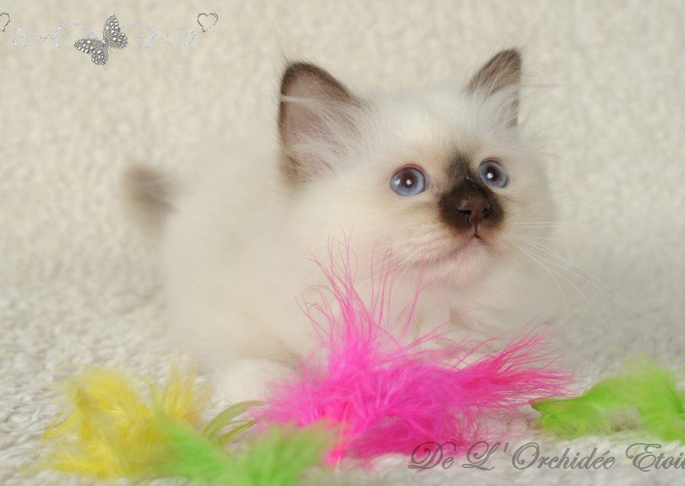 Lady Bella à 11 semaines (réservée)