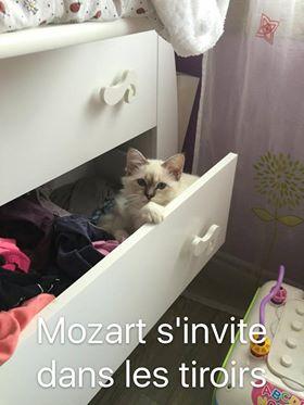 mozart_2016_08_02