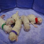 Naissance des bébés d'Isatys