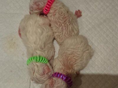 Naissance des bébés de Lutine
